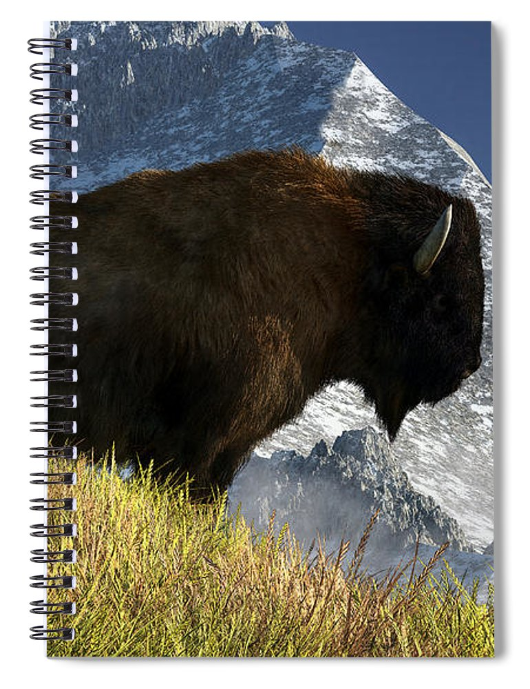 Rocky Mountain Buffalo