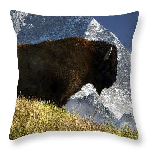 Rocky Mountain Buffalo