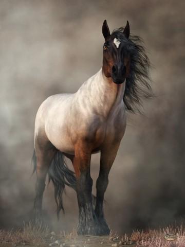Bay Roan Horse Art