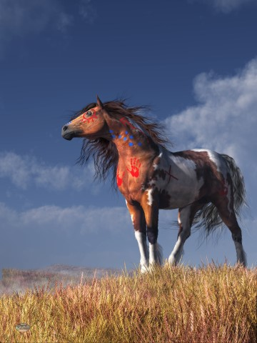 Horse With War Paint