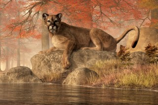 The Old Mountain Lion
